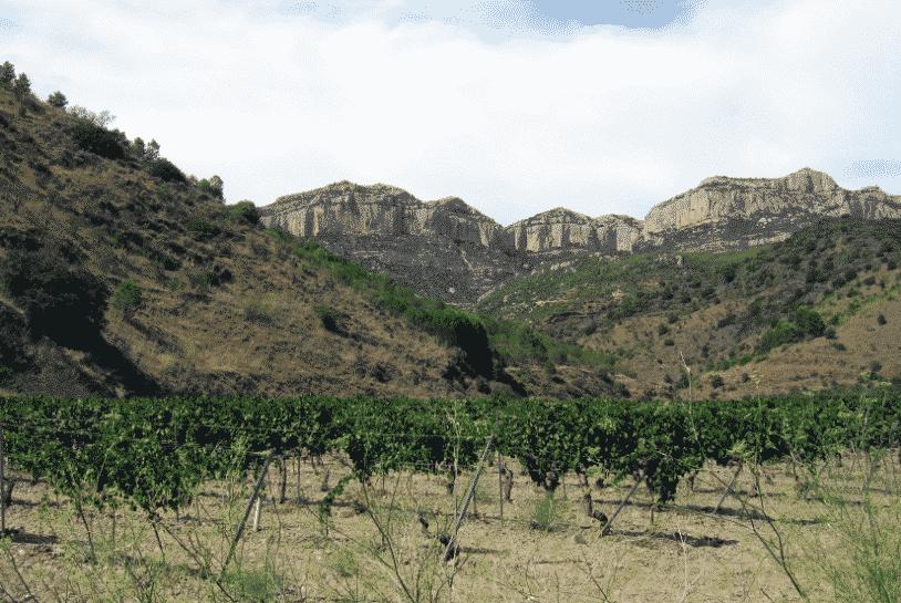 Vinyes d'Escaladei (Montsant)