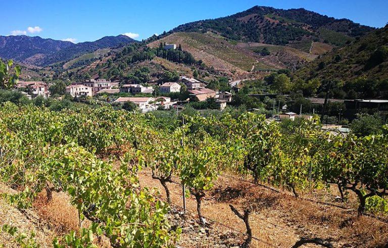 Porrera Priorat vinyes